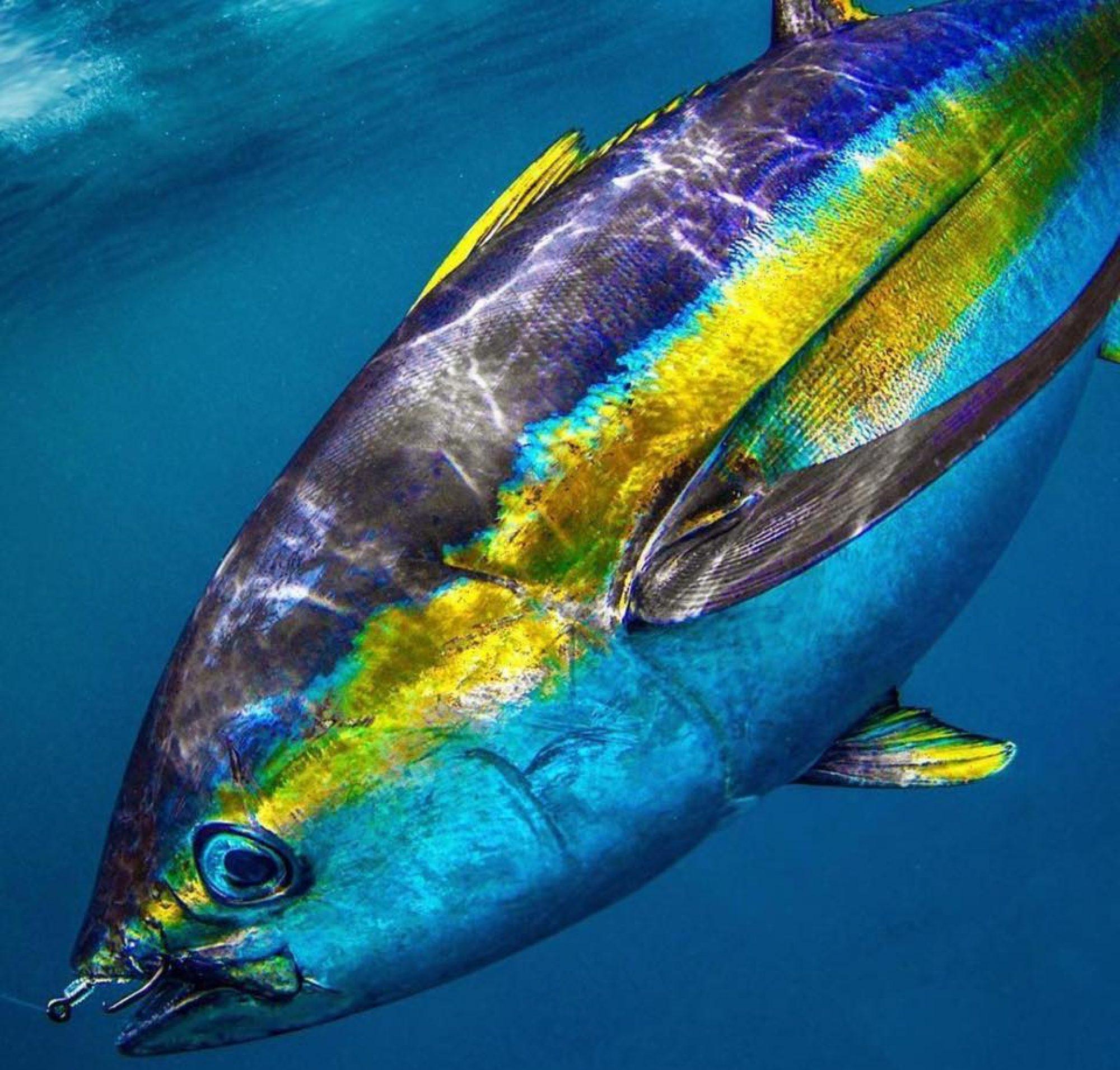 Get Anet Sportfishing